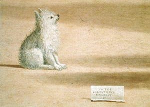 Vittore Carpaccio - Vision of St. Augustine (detail of the dog) 1502-08